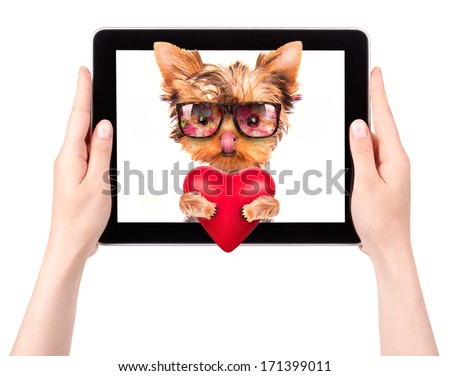 valentine puppy dog holding heart with tablet computer - stock photo