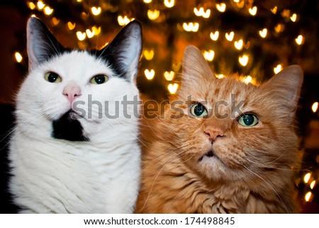 Valentine's Cats - stock photo