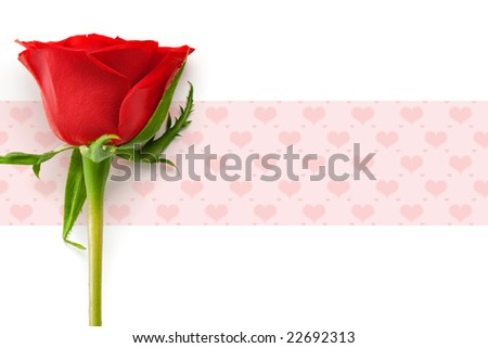 valentine's day concept with red rose - stock photo