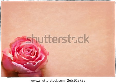 Valentine's Day Greeting card with room for text, pink rose, and soft border. Great for Valentine's Day, Mother's Day and Easter. - stock photo