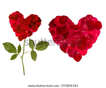 Valentine's Day heart of rose petals isolated  white background