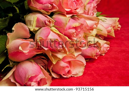 Valentine's day roses closeup - stock photo