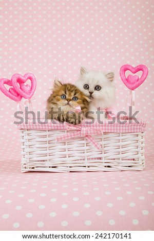 Valentine silver and golden Chinchilla Persian kittens sitting inside white basket with ornamental pink Valentine hearts on light pink background  - stock photo