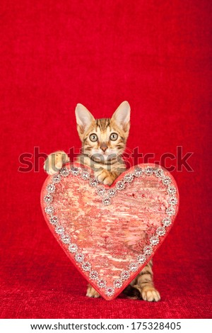 Valentine theme Bengal kitten holding red ornamental heart with fake diamante against red background