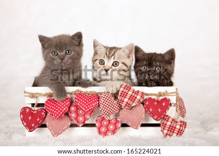 Valentine theme kittens sittings inside white wooden box with red patchwork hearts on white fake fur background - stock photo