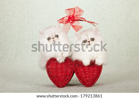 Valentine theme Silver Chinchilla kittens sitting inside red heart shaped basket with red bow against light green background  - stock photo