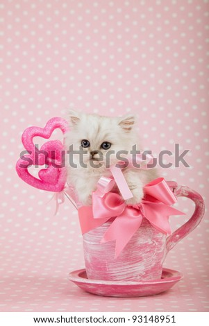 Valentine theme Silver Chinchilla Persian kitten in pink cup with bow - stock photo