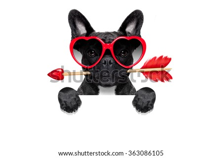 valentines french bulldog dog in love holding a cupids arrow with mouth ,behind blank empty blackboard or banner ,wearing sunglasses, isolated on white background - stock photo