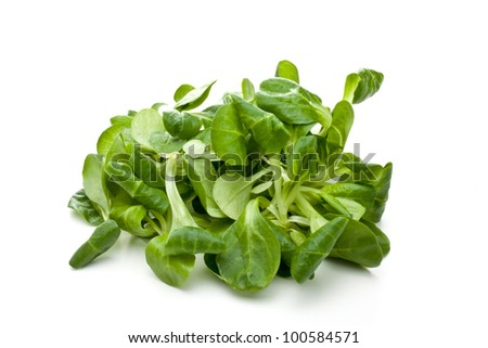 valerian leaf salad on a bowl - stock photo