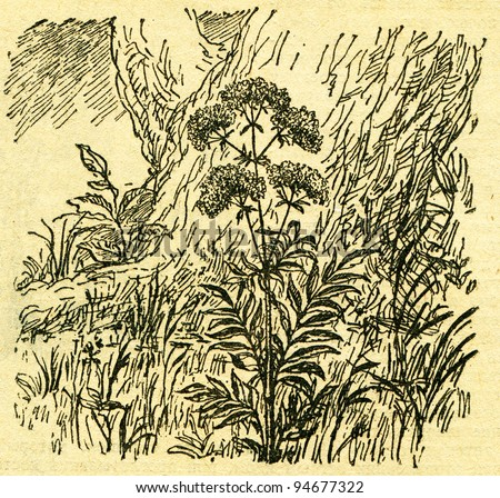 """Valeriana - an illustration from the book """"In the wake of Robinson Crusoe"""", Moscow, USSR, 1946. Artist Petr Pastukhov - stock photo"""