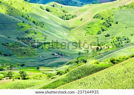 valley landscape in Moc Chau, Vietnam. Ethnic minorities lot of maize grown on the valley of mountain in Moc Chau - stock photo