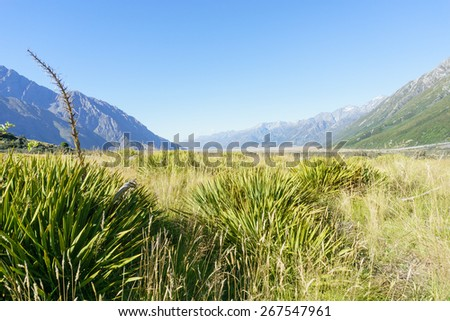 Valley of flax between two converging ranges in Southern Alps. - stock photo