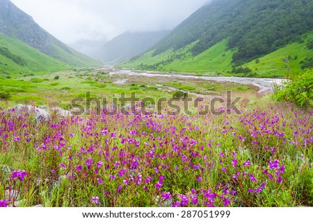 valley of flowers , india - stock photo