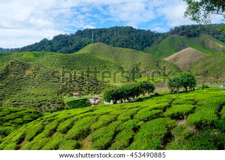 Valley view of tea plantations with blue sky from Cameron Highlands, Malaysia. - stock photo
