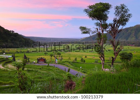 Valley with rice fields and trees at sunset. Bali - stock photo
