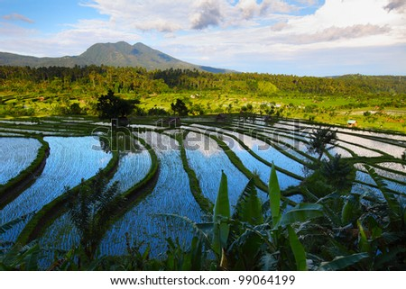 Valley with rice fields and trees at sunset light. Bali - stock photo
