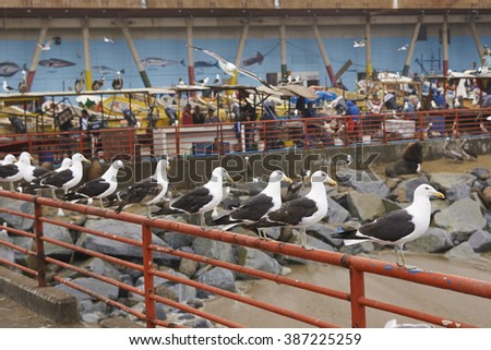 VALPARAISO, CHILE - NARCH 02, 2016:  Seagulls lining the railings of a pier at the fish market in the UNESCO World Heritage port city of Valparaiso in Chile. - stock photo