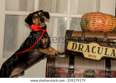 Vampire Dog - stock photo