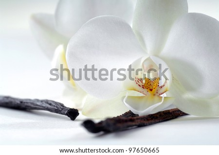 Vanilla - stock photo