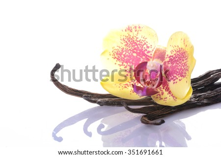 Vanilla Bean and Flower isolated on white background - stock photo