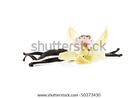 Vanilla beans with orchid - stock photo