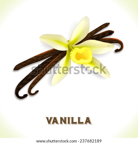 Vanilla pod and flower isolated on white background  illustration