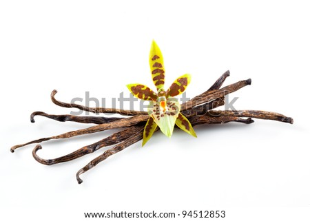Vanilla Pods and Flower isolated on a white background - stock photo