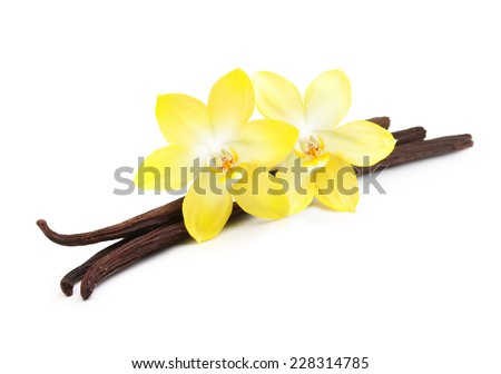 Vanilla pods and orchid flower isolated on white background