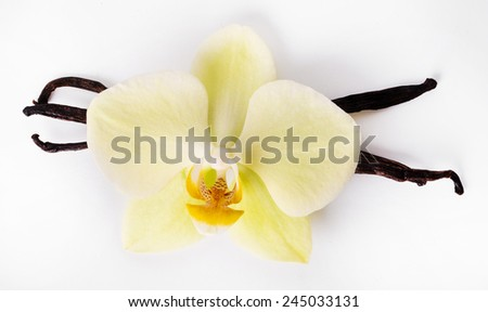 Vanilla stick on a white background - stock photo