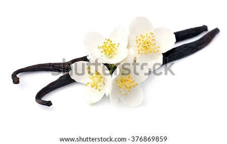 Vanilla sticks with white flowers on white backgrounds.