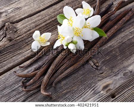 Vanilla with jasmine flowers - stock photo