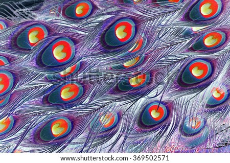 Varicolored composition based on patterns of peacock feathers with changed colors. - stock photo