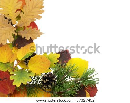 varicoloured leaves on a white background - stock photo