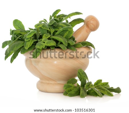 Variegated sage herb leaf sprigs in a marble mortar with pestle over white background. - stock photo