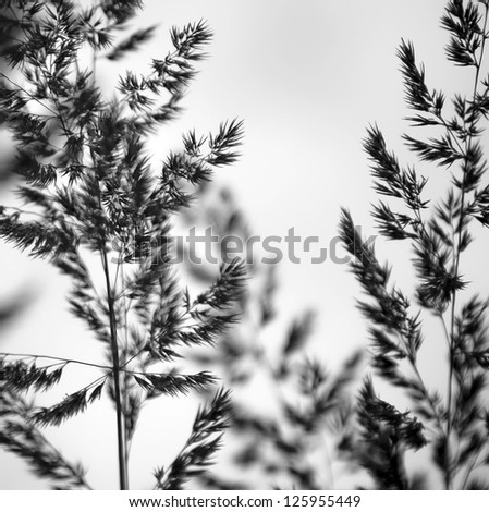 Variegated structures of flowering blades of grass. - stock photo