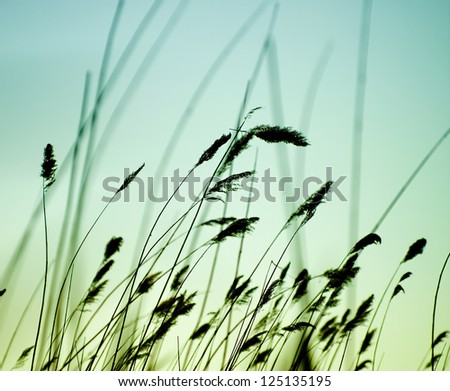 Variegated structures of flowering grass. - stock photo