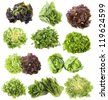varieties of salads in front of white background - stock photo