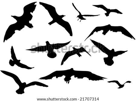 variety flying sea-gulls illustration - stock photo