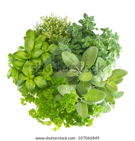 variety fresh mediterranean herbs. marjoram; parsley; basil; rosemary; thyme, sage - stock photo