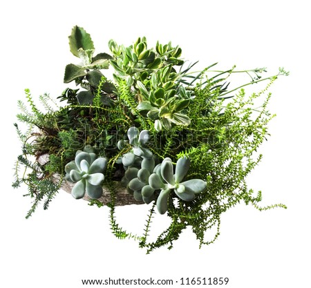 variety of beautiful succulent plants in a stone pot on a white background - stock photo