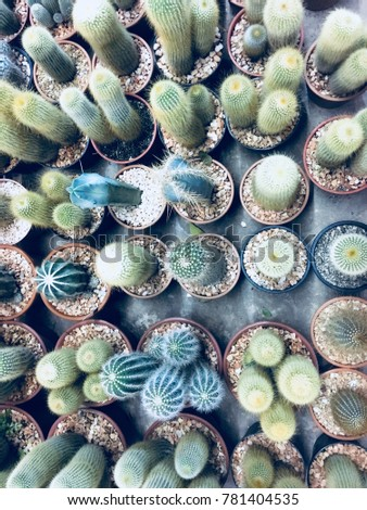 Variety of Cactus. Sharp pointed agave plant leaves.