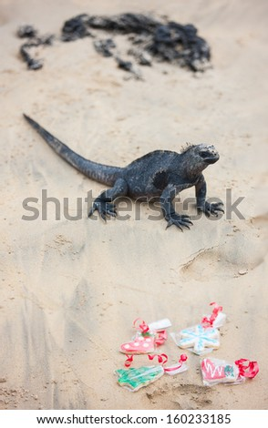 Variety of Christmas cookies at beach with marine iguana on background