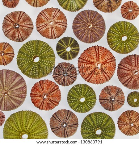 Variety of colorful sea urchins - stock photo
