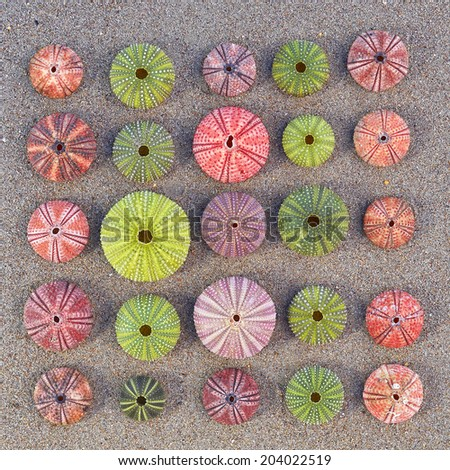 variety of colorful sea urchins on the beach - stock photo