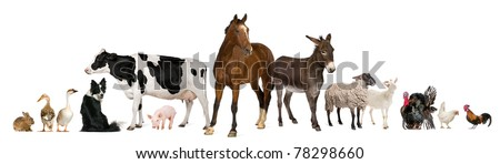 Variety of farm animals in front of white background - stock photo