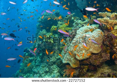 variety of fish and colorful coral of great barrier reef, australia - stock photo