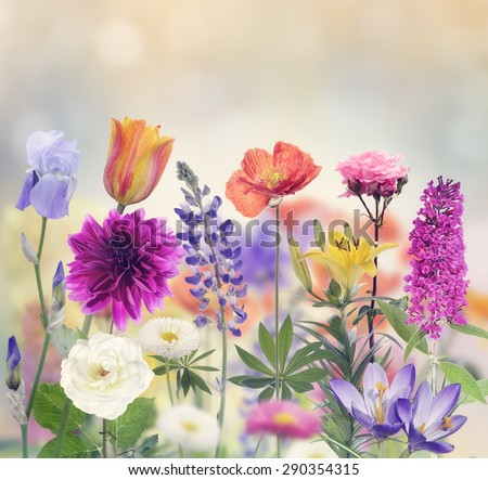 Variety Of Flowers Blooming In The Garden - stock photo