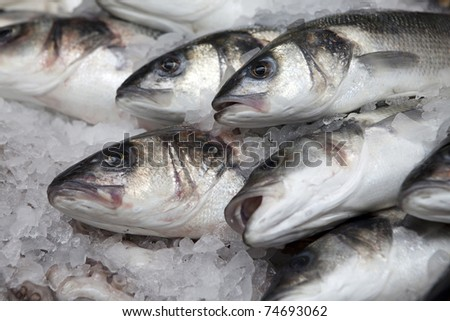 variety of fresh fish seafood in market closeup background - stock photo