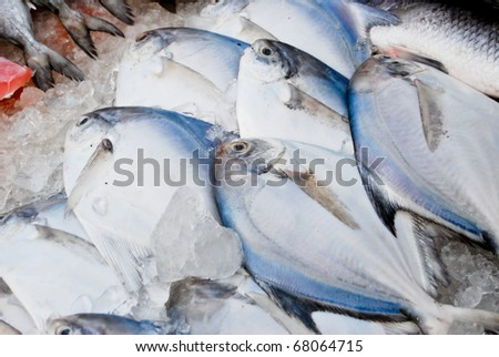 variety of fresh fish seafood in market closeup background , Asia , Thailand - stock photo