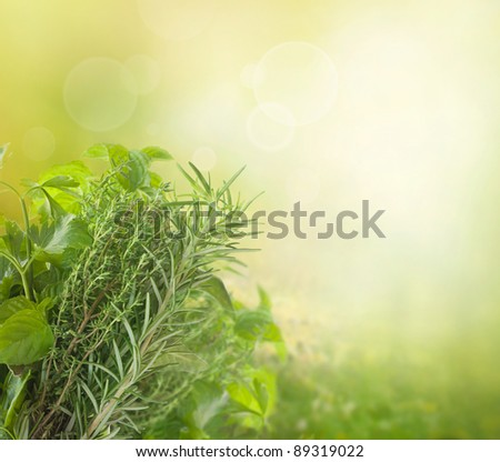 Variety of fresh herbs in the garden with bokeh lights - stock photo